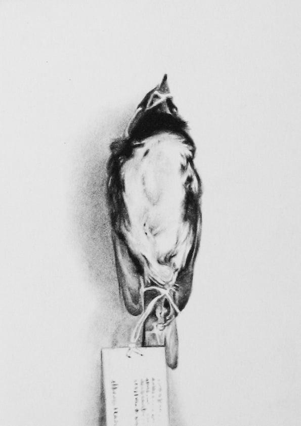 Nicolas Leignel, Moineau, 2014, Fusain sur papier, 14.8x21cm